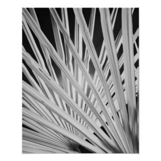 Black White view of palm tree fronds Posters
