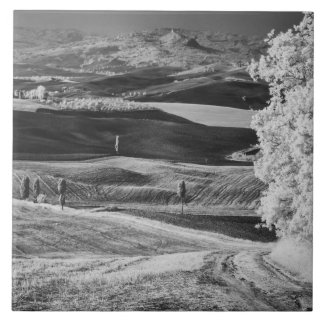 Black & White view of winding road Tile