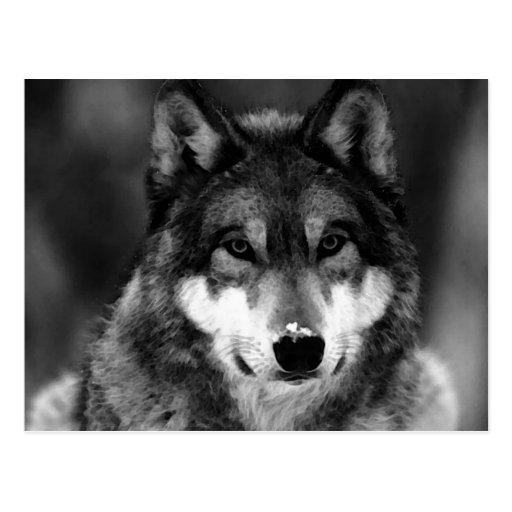 Black & White Wolf Postcards