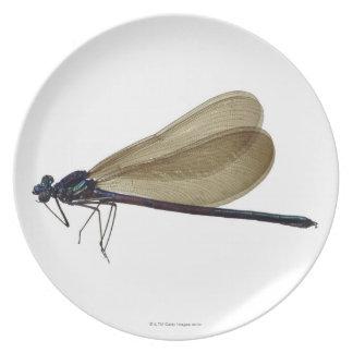 Black-winged damselfly dinner plate