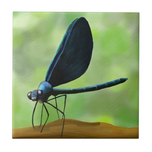 Black winged dragonfly - photo#5