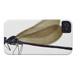 Black-winged damselfly iPhone 4 Case-Mate cases