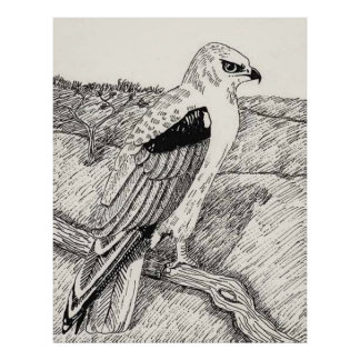 Black Winged Kite Poster