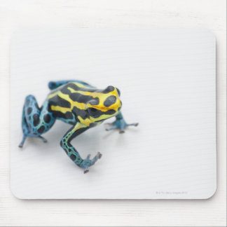 Black, Yellow and Blue Poison Dart Frog Mouse Pad