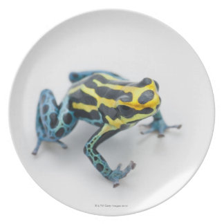 Black, Yellow and Blue Poison Dart Frog Plate