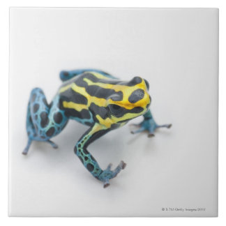Black, Yellow and Blue Poison Dart Frog Tile