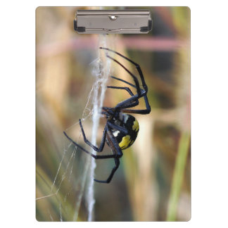 Black & Yellow Argiope Garden Spider Clipboard