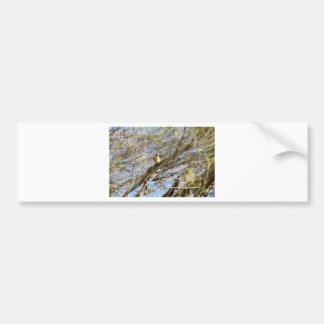 BLACK & YELLOW BIRD IN TREE QUEENSLAND AUSTRALIA BUMPER STICKER