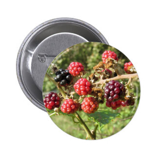 Blackberries bunch 6 cm round badge