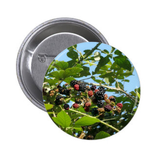 Blackberries bunch not yet fully ripened 6 cm round badge