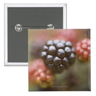Blackberries close up. 15 cm square badge