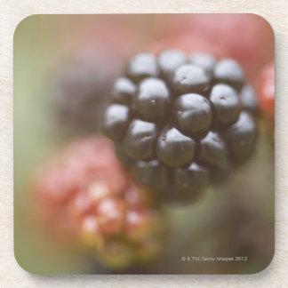 Blackberries close up. coaster