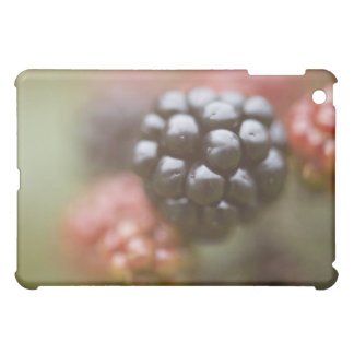 Blackberries close up. cover for the iPad mini