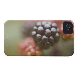 Blackberries close up. iPhone 4 Case-Mate case