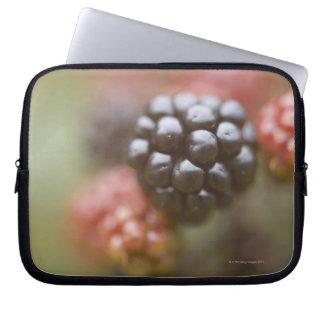 Blackberries close up. laptop sleeve