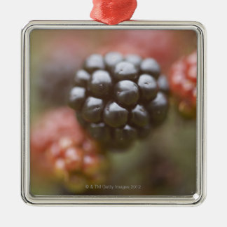 Blackberries close up. Silver-Colored square decoration