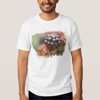 Blackberries close up. tshirt