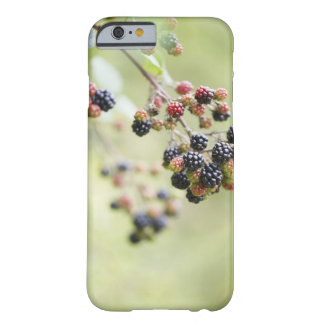 Blackberries growing outdoors. barely there iPhone 6 case