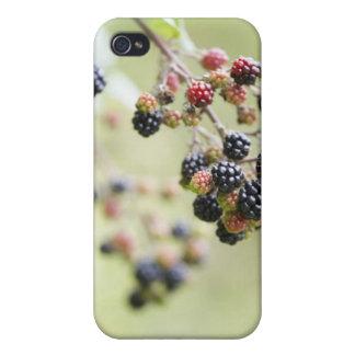 Blackberries growing outdoors. iPhone 4 cover