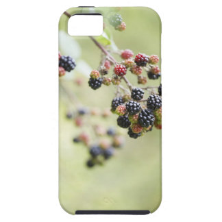 Blackberries growing outdoors. iPhone 5 covers