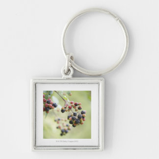 Blackberries growing outdoors. key ring