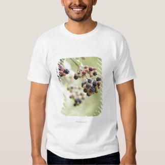 Blackberries growing outdoors. shirts