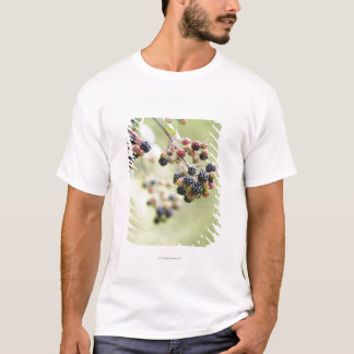 Blackberries growing outdoors. T-Shirt