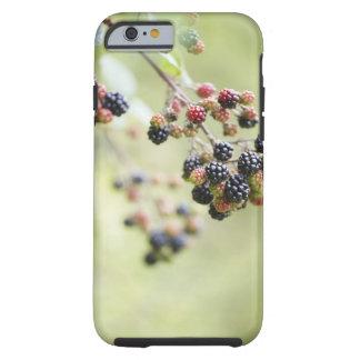 Blackberries growing outdoors. tough iPhone 6 case