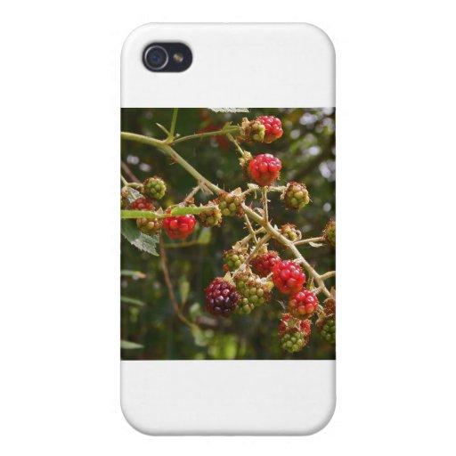 Blackberries Cases For iPhone 4