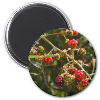 Blackberries Magnets