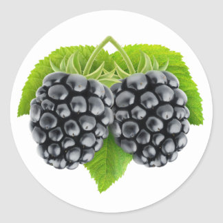 Blackberries on leaves classic round sticker