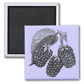 Blackberries Square Magnet