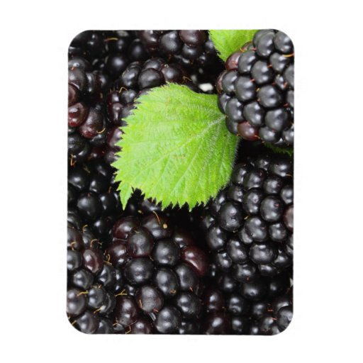 BlackBerry Background Rectangle Magnets