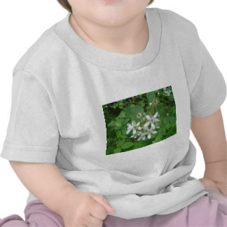 Blackberry Blossoms Shirts