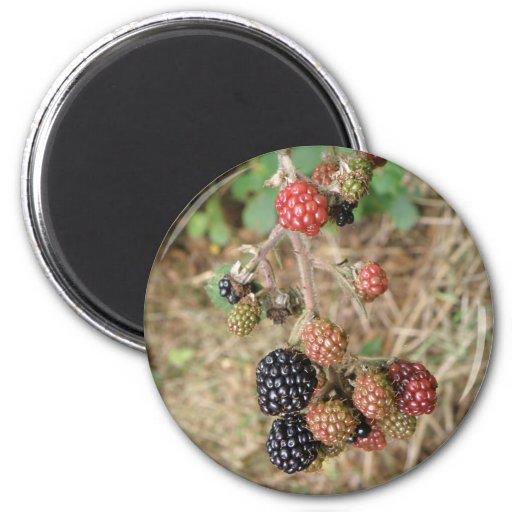 Blackberry Bonanza Magnet