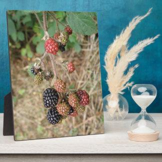 Blackberry Bonanza Plaque