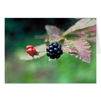Blackberry Greeting Card