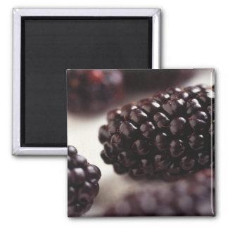 Blackberry Closeup Fridge Magnets