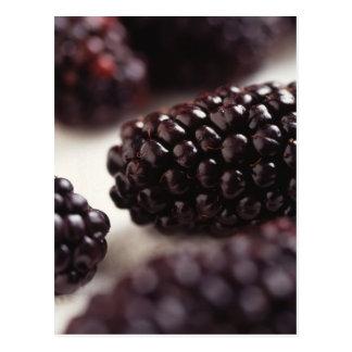 Blackberry Closeup Postcard