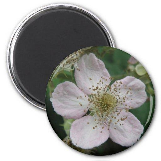 Blackberry Flower Macro Magnet