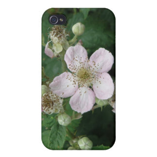 Blackberry Flowers  Case For The iPhone 4