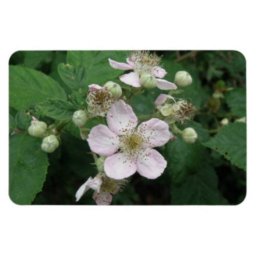 Blackberry Flowers Premium Magnet