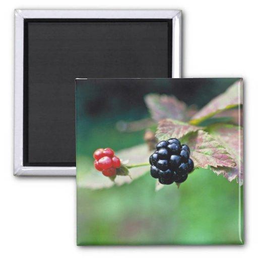 Blackberry Refrigerator Magnets