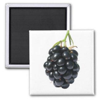Blackberry Square Magnet