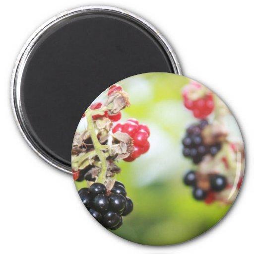 Blackberry Summer Refrigerator Magnet