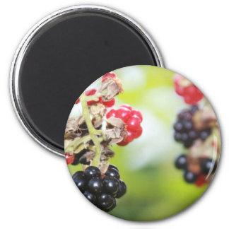 Blackberry Summer Magnets