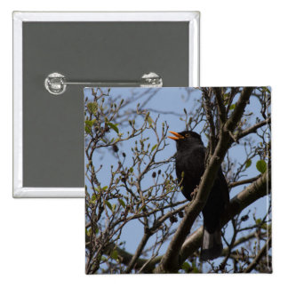 Blackbird 15 Cm Square Badge