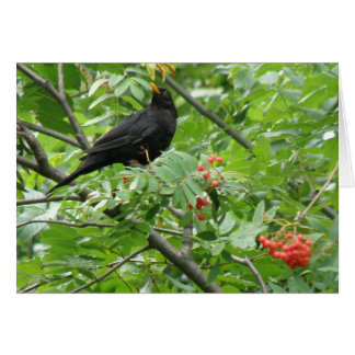 Blackbird and Berries Greeting Card