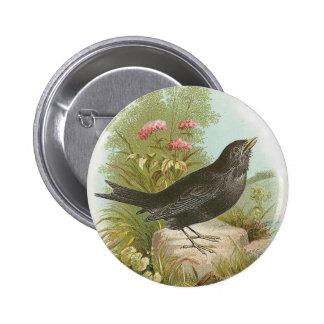 Blackbird 6 Cm Round Badge