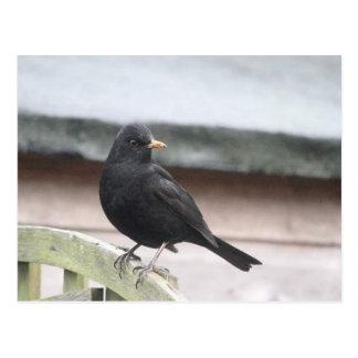 Blackbird Cards